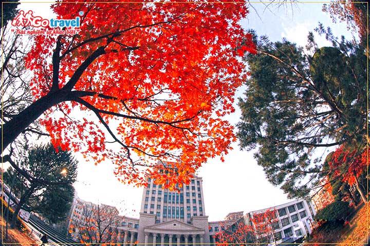 Đi tour Hàn quốc mùa thu ghé thăm thủ đô Seoul