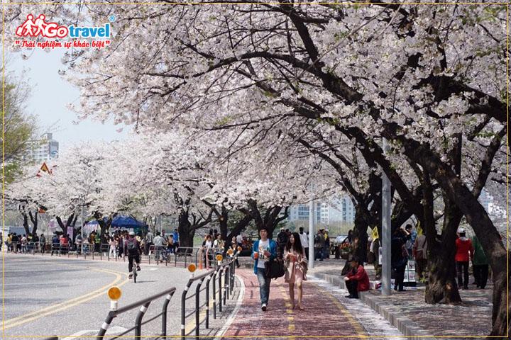 Đường Yeouiseo-ro tại Yeouido