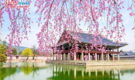 Top những địa điểm đi du lịch hàn quốc mùa xuân