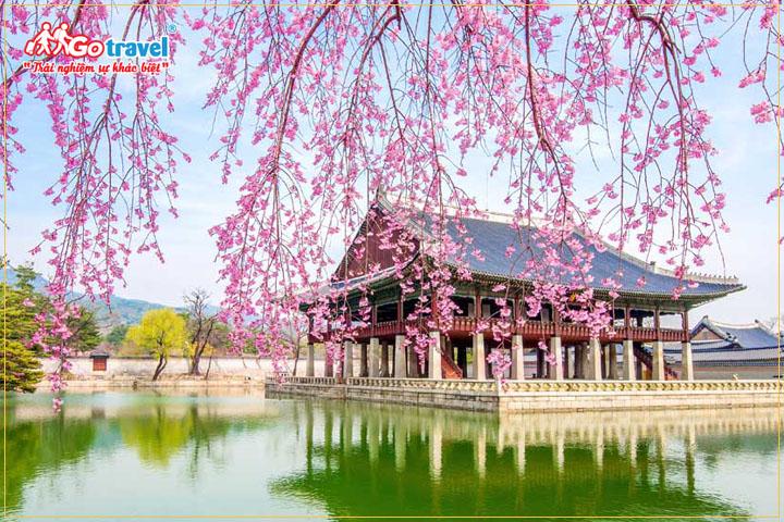 Du lịch Hàn Quốc mùa xuân