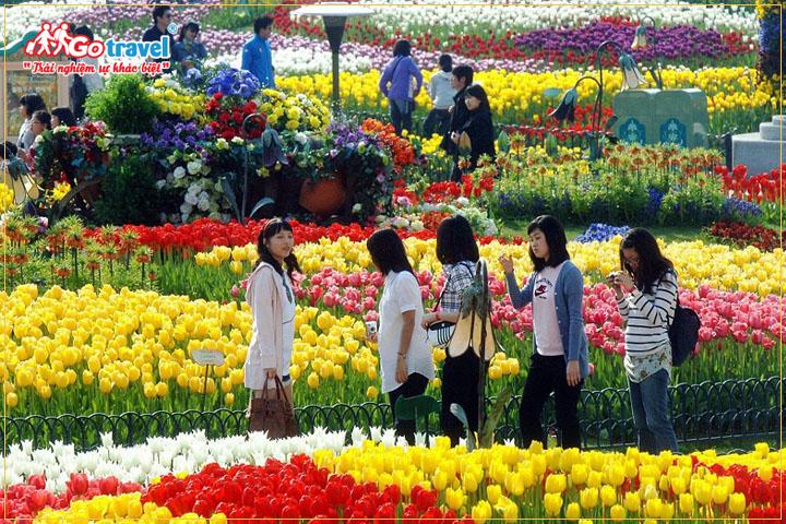Lễ hội hoa Tulip Taean